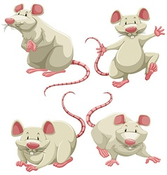 White mice vector image