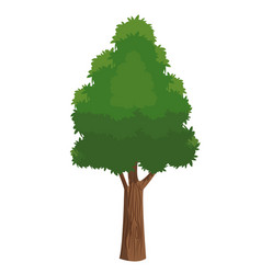 tree plant natural ecology forest vector image