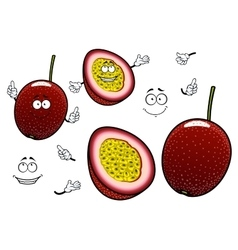 South american cartoon exotic passion fruits vector
