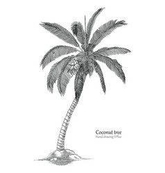 Coconut tree hand drawing engraving style vector