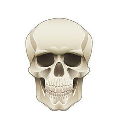 Object skull vector