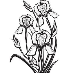 sketch of iris flowers vector image