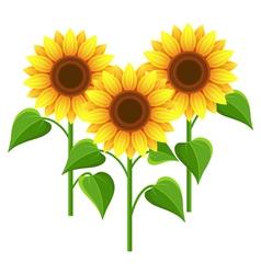 Summer flowers sunflowers nature wallpaper vector image