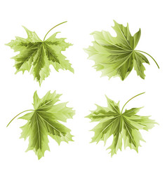 Four colored leaves maple the green background vector