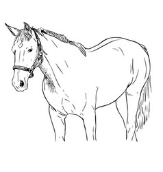 Hand - drawn of a horse vector
