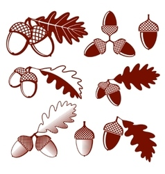 Oak acorns and leaves set vector