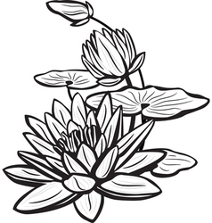 sketch of lotus flowers vector image