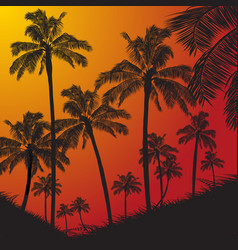 tropical palm trees silhouette on sunset vector image