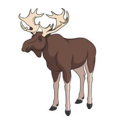 color image of elk moose vector image vector image