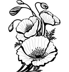 sketch of poppy flowers vector image vector image
