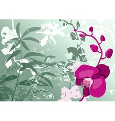 Orchid Flower on a Green Background vector