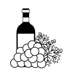 wine bottle bunch fresh grapes vector image