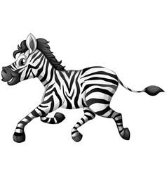 Zebra running on white background vector