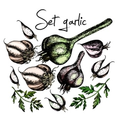 Set of garlic vector image vector image