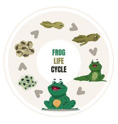 Frog life cycle amphibian growth steps circular vector