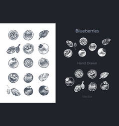 Hand drawn blueberry icons organic food vector
