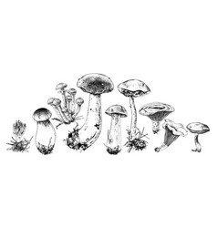 hand drawn forest mushrooms vector image