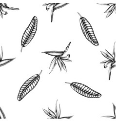 seamless pattern with black and white strelitzia vector image