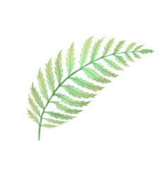 Watercolor fern bush leaf plant deocration on vector