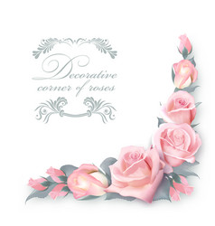 corner background with pink roses and green vector image vector image