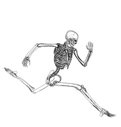 Human skeleton running vector