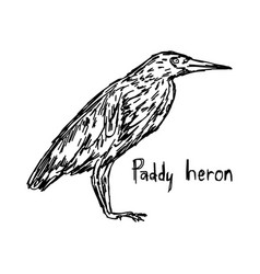 Paddy heron - sketch hand drawn vector
