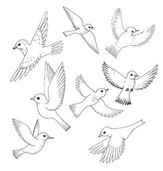 Set of flying birds vector