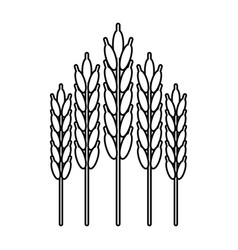 harvesting wheat ears thin line vector image
