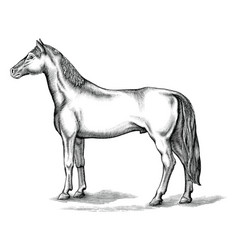 antique engraving horse black and white clip vector image
