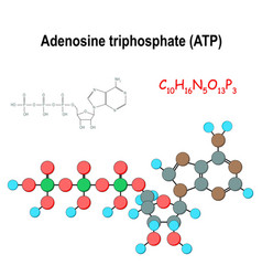 Atp structural chemical formula and model vector