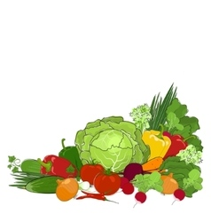 Fresh Raw Vegetables Isolated on White vector image