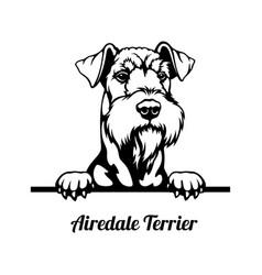 Peeking dog - airedale terrier breed - head vector