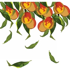 Fresh growing peaches vector image