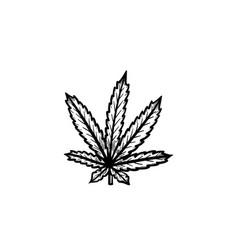 marijuana leaf hand drawn sketch icon vector image