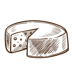 cheese head sketch food or dairy product swiss vector image
