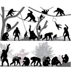 Family chimpanzee vector