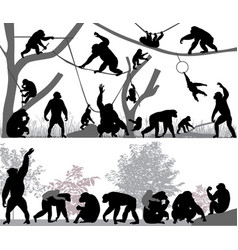 Family of chimpanzee vector