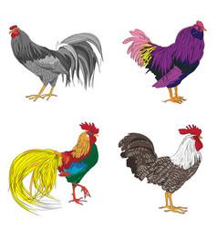 four cockerel series vector image