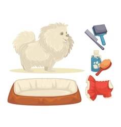 Dogs set of accessories for dogs vector