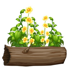Flowers and wooden log on white background vector