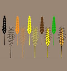 wheat ear icon set barley ear vector image