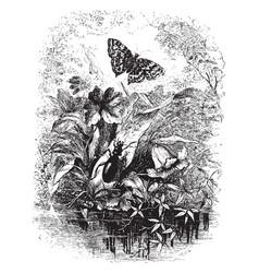 Beetle butterfly vintage vector