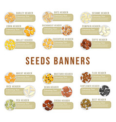 cards or banners header with seeds kernels food vector image