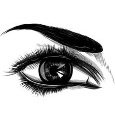 eye on white background woman eye the eye logo vector image
