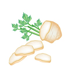 Fresh Slice Celery Root on White Background vector image