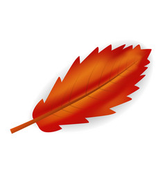 red leaf icon realistic style vector image