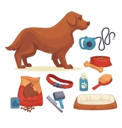 Dogs Set of accessories for dogs vector image vector image