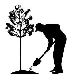 man planting a tree vector image