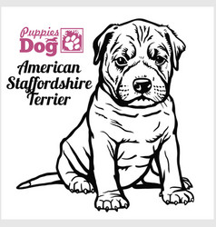 American staffordshire terrier puppy sitting vector
