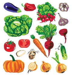 Colored vegetables on white background vector